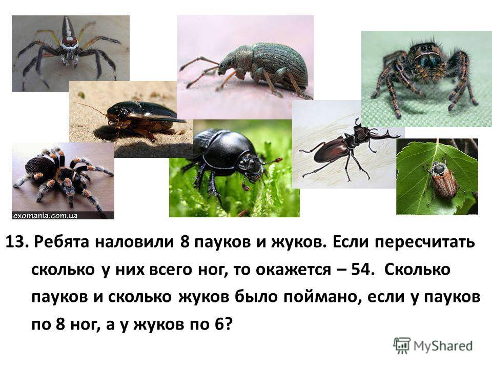 13. Ребята наловили 8 пауков и жуков. Если пересчитать сколько у них всего ног, то окажется – 54. Сколько пауков и сколько жуков было поймано, если у пауков по 8 ног, а у жуков по 6?