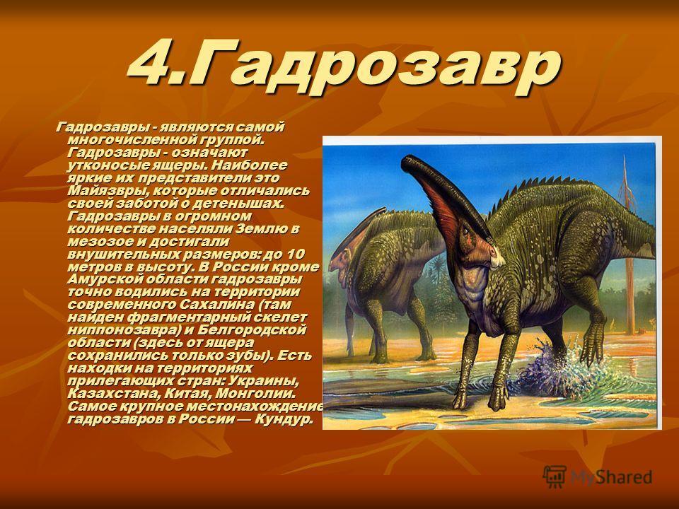 4.Гадрозавр Гадрозавры - являются самой многочисленной группой. Гадрозавры - означают утконосые ящеры. Наиболее яркие их представители это Майязвры, которые отличались своей заботой о детенышах. Гадрозавры в огромном количестве населяли Землю в мезоз