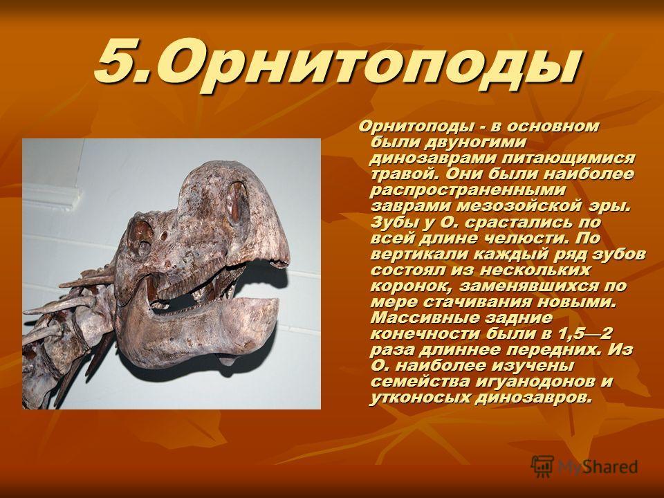 5.Орнитоподы Орнитоподы - в основном были двуногими динозаврами питающимися травой. Они были наиболее распространенными заврами мезозойской эры. Зубы у О. срастались по всей длине челюсти. По вертикали каждый ряд зубов состоял из нескольких коронок,