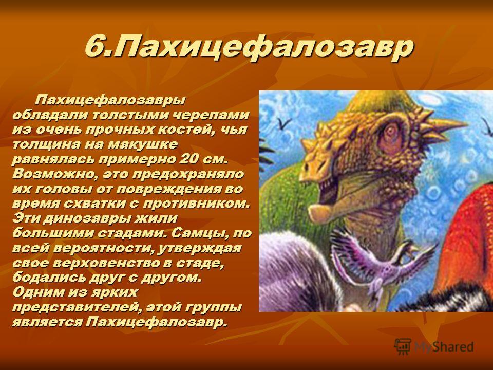 6.Пахицефалозавр Пахицефалозавры обладали толстыми черепами из очень прочных костей, чья толщина на макушке равнялась примерно 20 см. Возможно, это предохраняло их головы от повреждения во время схватки с противником. Эти динозавры жили большими стад