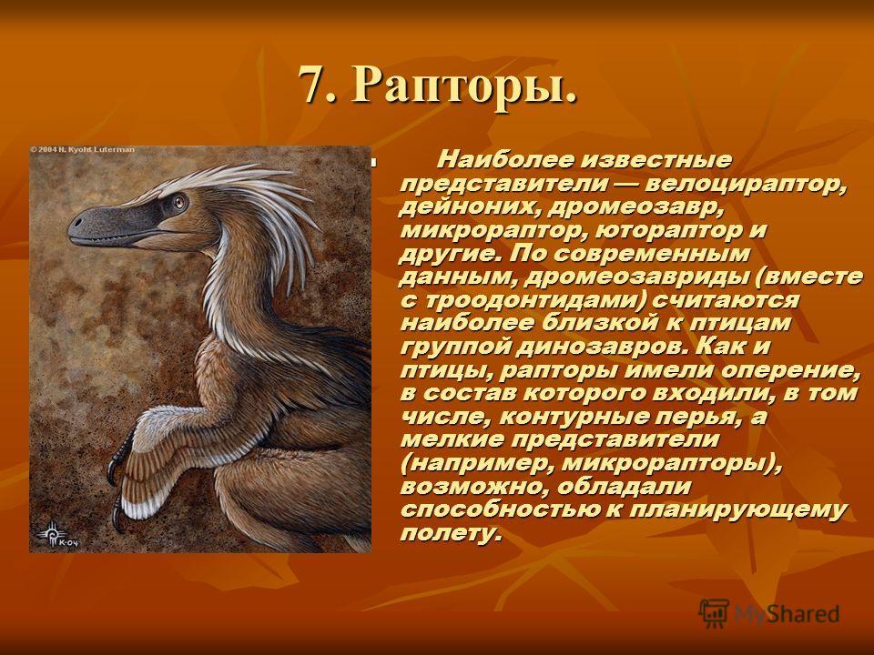 7. Рапторы. Наиболее известные представители велоцираптор, дейноних, дромеозавр, микрораптор, ютораптор и другие. По современным данным, дромеозавриды (вместе с троодонтидами) считаются наиболее близкой к птицам группой динозавров. Как и птицы, рапто