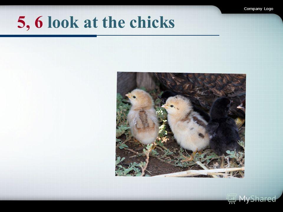 Company Logo 5, 6 look at the chicks