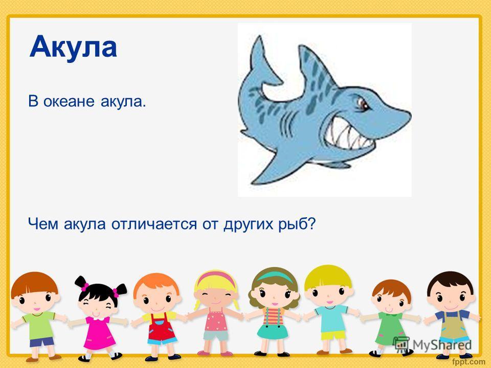 Акула Чем акула отличается от других рыб? В океане акула.