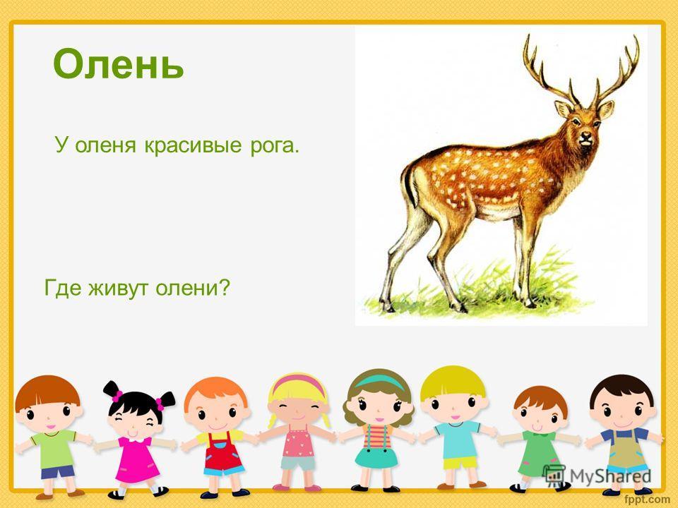 Олень Где живут олени? У оленя красивые рога.