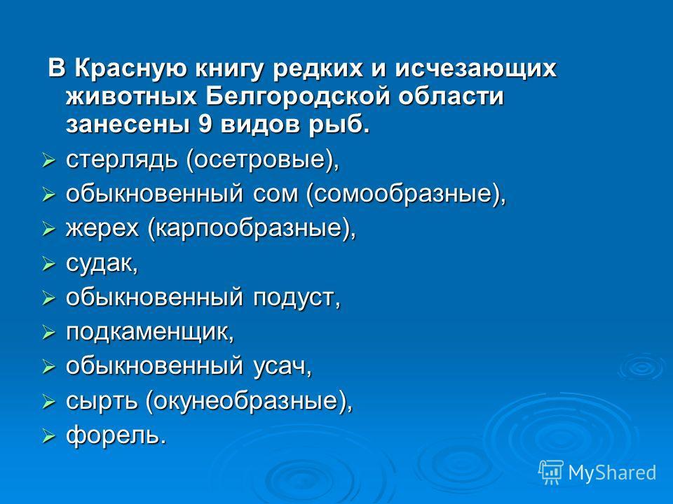 В Красную книгу редких и исчезающих животных Белгородской области занесены 9 видов рыб. В Красную книгу редких и исчезающих животных Белгородской области занесены 9 видов рыб. стерлядь (осетровые), стерлядь (осетровые), обыкновенный сом (сомообразные