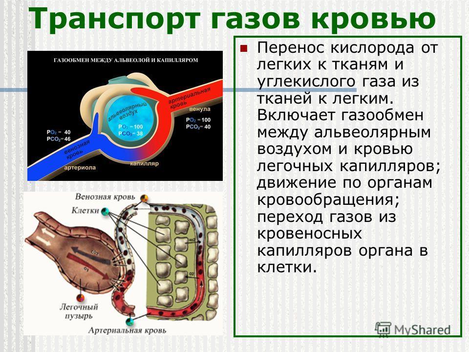 Транспорт газов кровью Перенос кислорода от легких к тканям и углекислого газа из тканей к легким. Включает газообмен между альвеолярным воздухом и кровью легочных капилляров; движение по органам кровообращения; переход газов из кровеносных капилляро