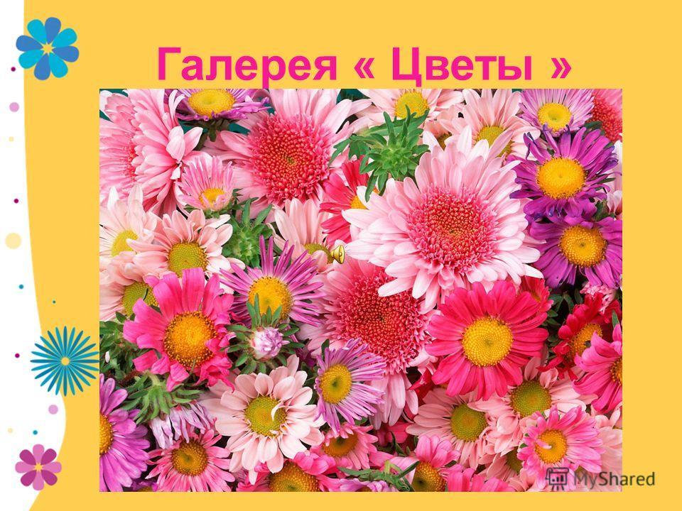 Галерея « Цветы »