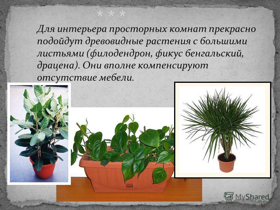 Для интерьера просторных комнат прекрасно подойдут древовидные растения с большими листьями (филодендрон, фикус бенгальский, драцена). Они вполне компенсируют отсутствие мебели. * * *