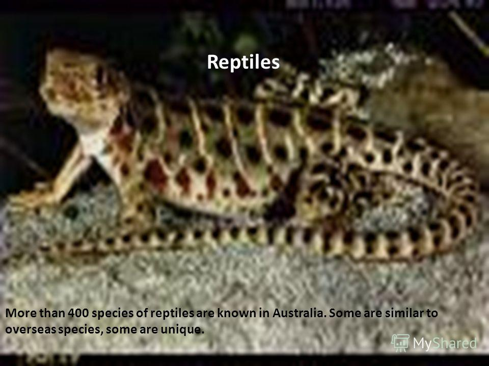 More than 400 species of reptiles are known in Australia. Some are similar to overseas species, some are unique. Reptiles