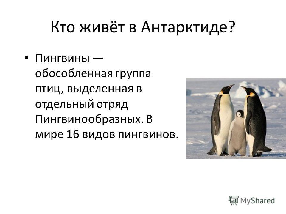 Кто живёт в Антарктиде? Пингвины обособленная группа птиц, выделенная в отдельный отряд Пингвинообразных. В мире 16 видов пингвинов.