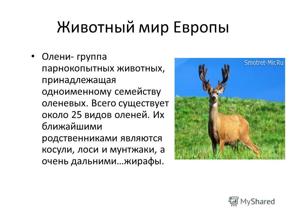 Животный мир Европы Олени- группа парнокопытных животных, принадлежащая одноименному семейству оленевых. Всего существует около 25 видов оленей. Их ближайшими родственниками являются косули, лоси и мунтжаки, а очень дальними…жирафы.