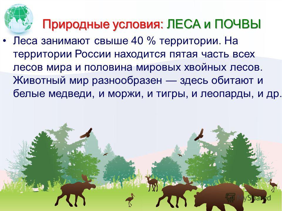 Природные условия: ЛЕСА и ПОЧВЫ Леса занимают свыше 40 % территории. На территории России находится пятая часть всех лесов мира и половина мировых хвойных лесов. Животный мир разнообразен здесь обитают и белые медведи, и моржи, и тигры, и леопарды, и