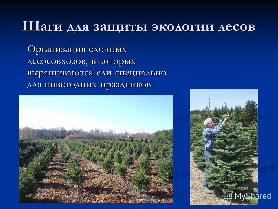 Шаги для защиты экологии лесов Организация ёлочных лесосовхозов, в которых выращиваются ели специально для новогодних праздников Организация ёлочных лесосовхозов, в которых выращиваются ели специально для новогодних праздников