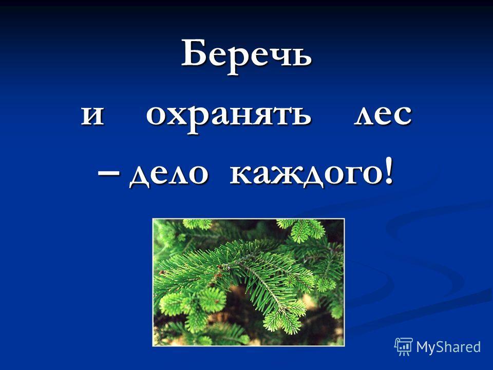 Беречь и охранять лес – дело каждого!