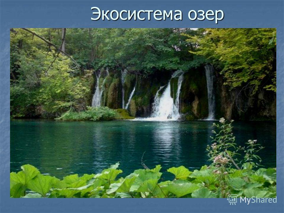 Экосистема озер