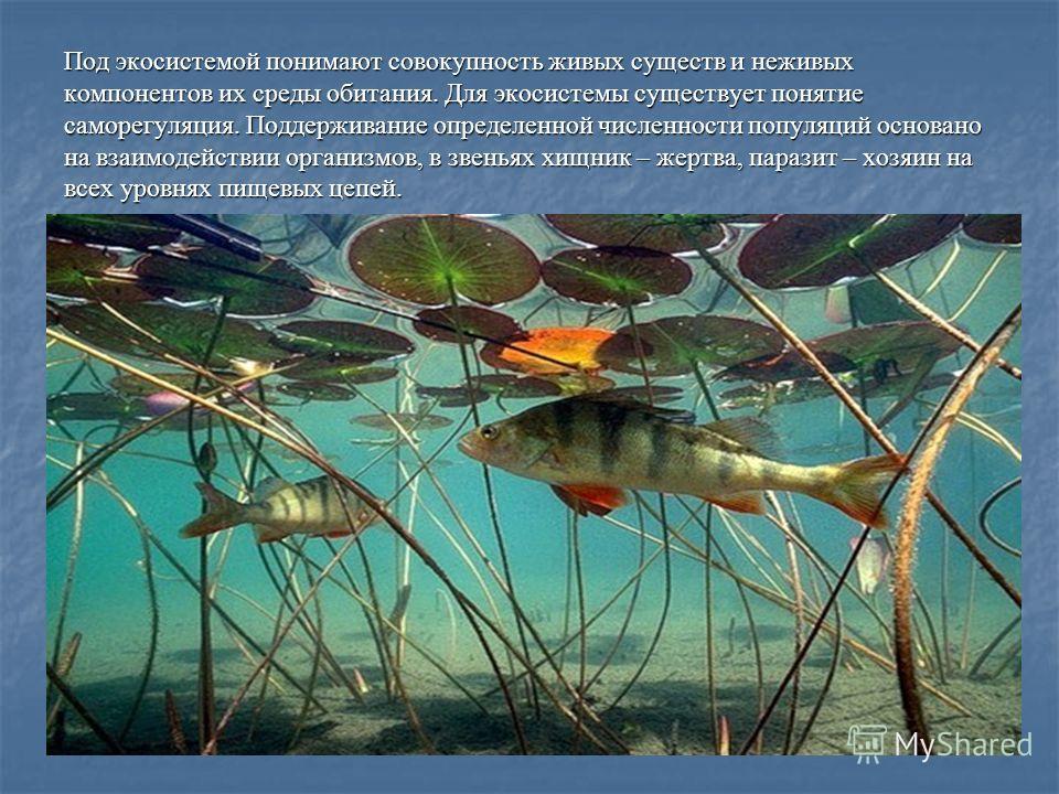 Под экосистемой понимают совокупность живых существ и неживых компонентов их среды обитания. Для экосистемы существует понятие саморегуляция. Поддерживание определенной численности популяций основано на взаимодействии организмов, в звеньях хищник – ж
