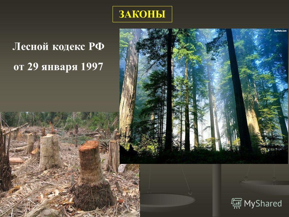 Лесной кодекс РФ от 29 января 1997 ЗАКОНЫ