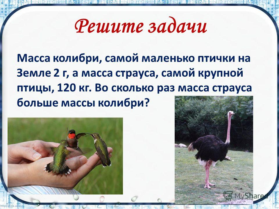 Решите задачи Масса колибри, самой маленько птички на Земле 2 г, а масса страуса, самой крупной птицы, 120 кг. Во сколько раз масса страуса больше массы колибри?