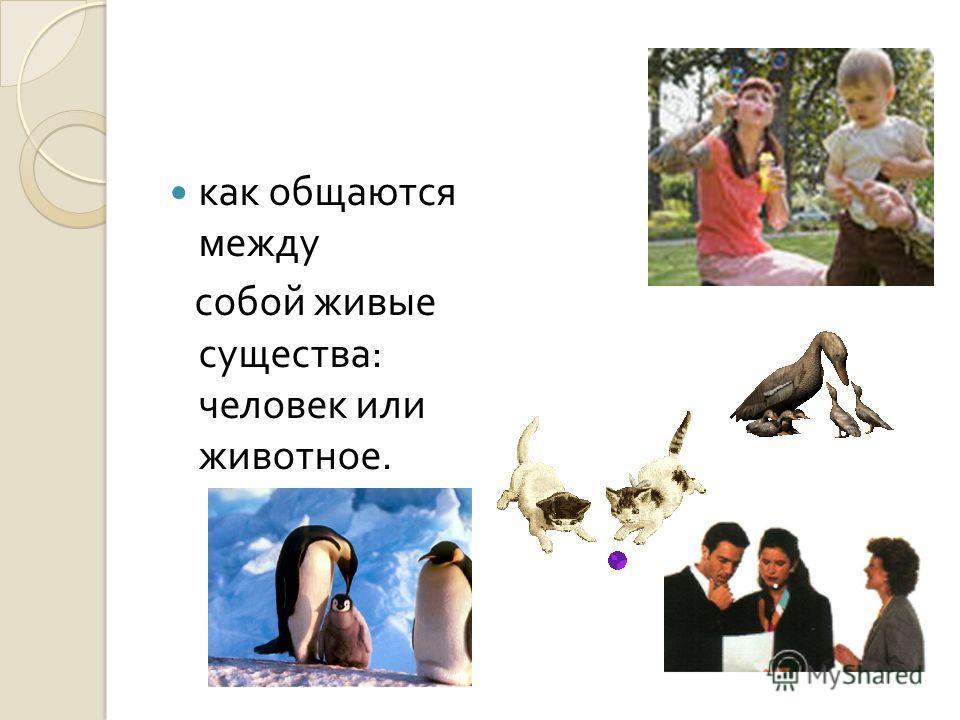 как общаются между собой живые существа : человек или животное.