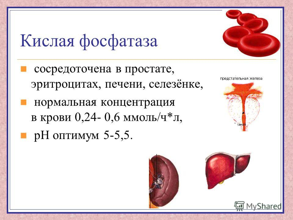 Кислая фосфатаза сосредоточена в простате, эритроцитах, печени, селезёнке, нормальная концентрация в крови 0,24- 0,6 ммоль/ч*л, рН оптимум 5-5,5.