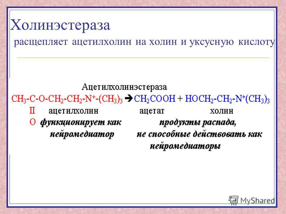 Холинэстераза расщепляет ацетилхолин на холин и уксусную кислоту.