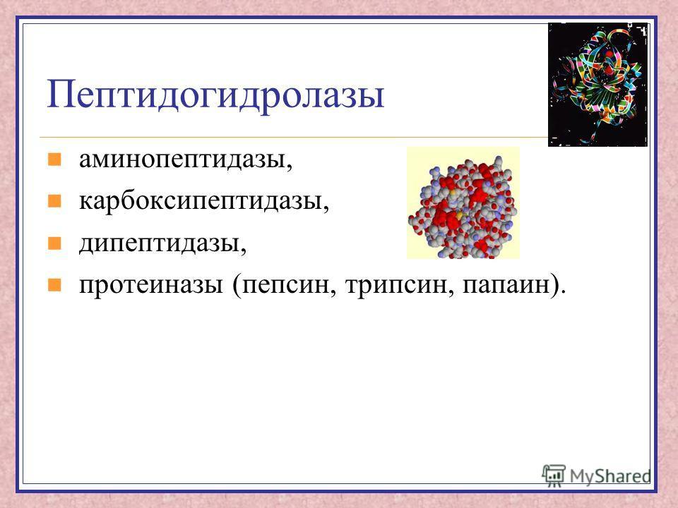 Пептидогидролазы аминопептидазы, карбоксипептидазы, дипептидазы, протеиназы (пепсин, трипсин, папаин).