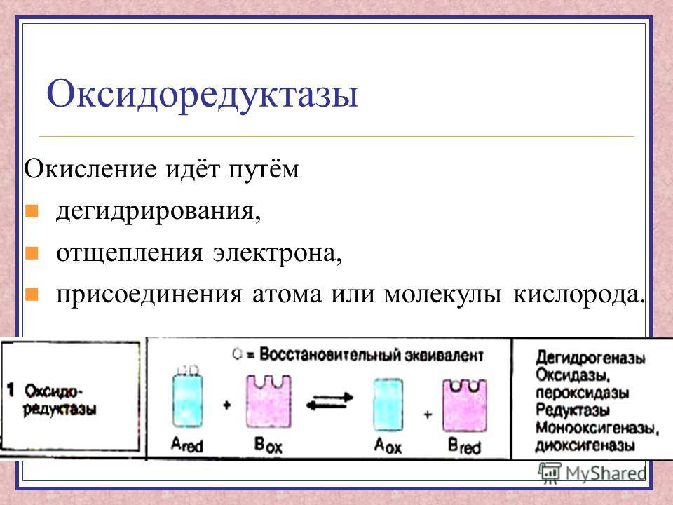 Оксидоредуктазы Окисление идёт путём дегидрирования, отщепления электрона, присоединения атома или молекулы кислорода.
