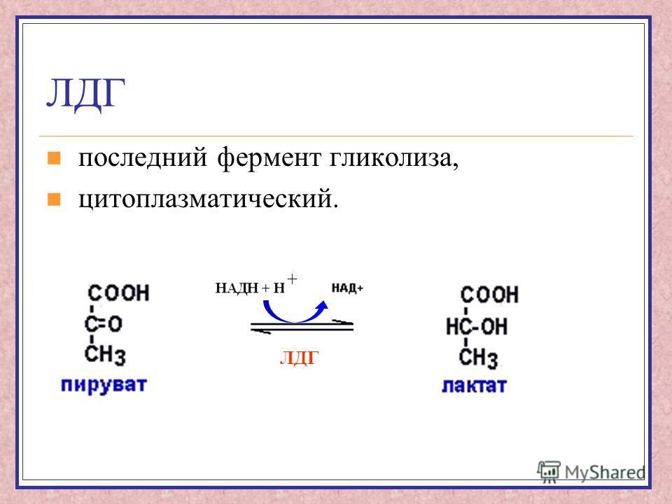 ЛДГ последний фермент гликолиза, цитоплазматический. ЛДГ +