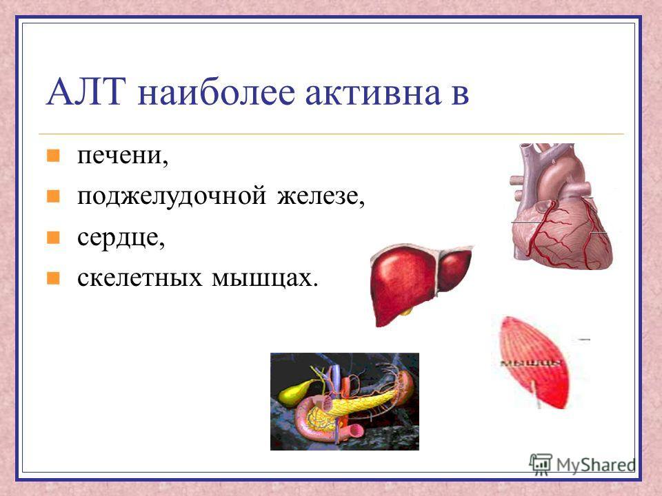 АЛТ наиболее активна в печени, поджелудочной железе, сердце, скелетных мышцах.