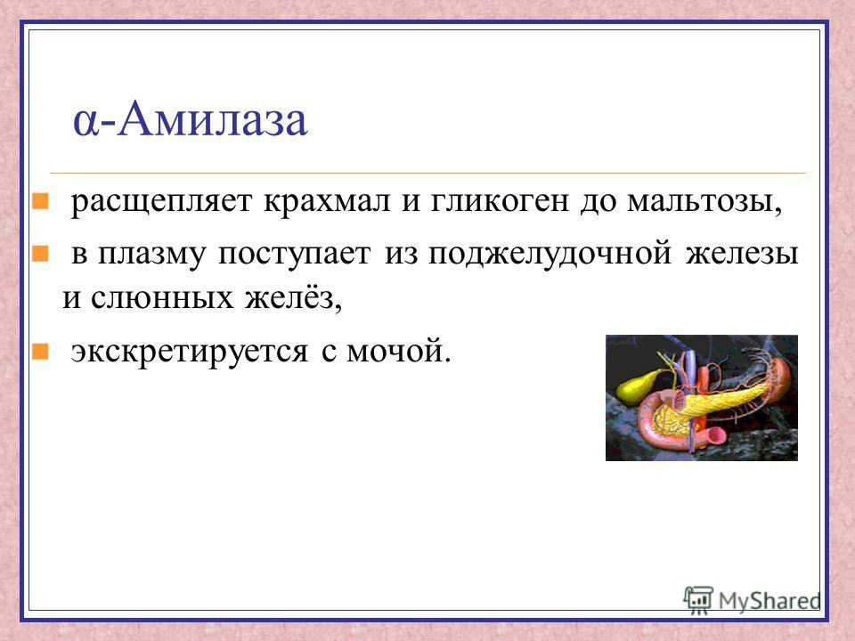 α-Амилаза расщепляет крахмал и гликоген до мальтозы, в плазму поступает из поджелудочной железы и слюнных желёз, экскретируется с мочой.