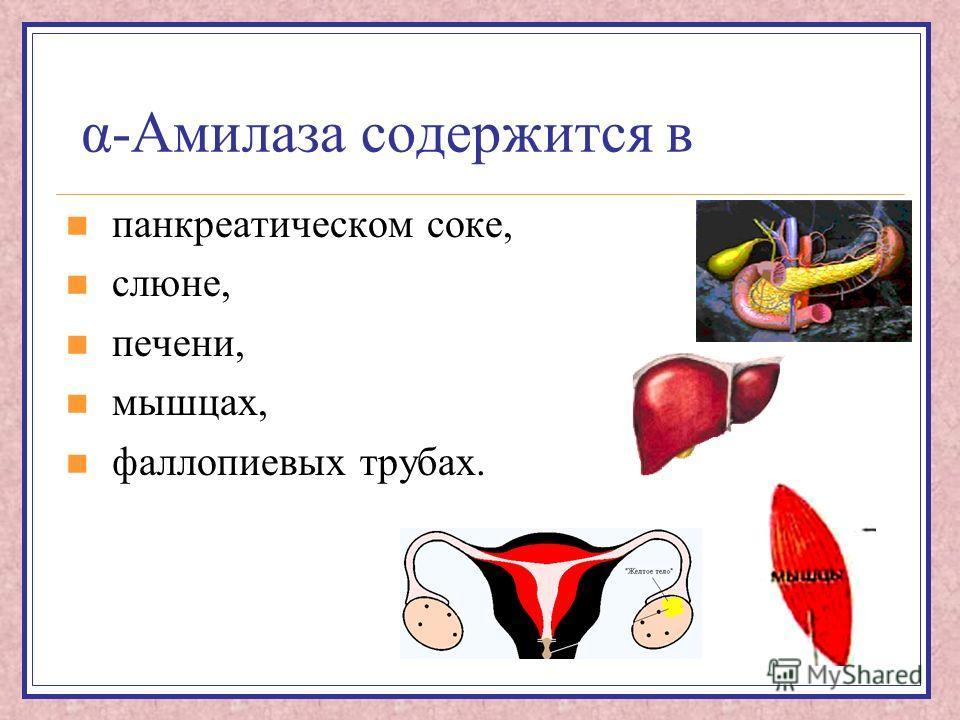 α-Амилаза содержится в панкреатическом соке, слюне, печени, мышцах, фаллопиевых трубах.