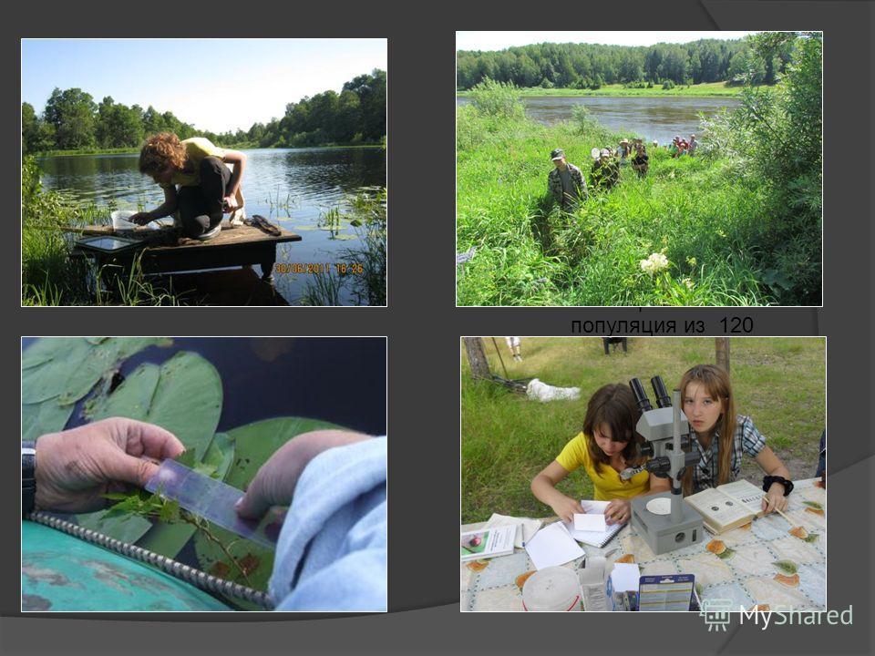 В 2006 году ребята из центра произвели посев чилима (водяного ореха) на озере Долгое. Сейчас там образовалась популяция из 120 растений, которые мы бережно охраняем. Ранее водяной орех отмечался на территории заказника только в оз. Ореховое и Сорокин