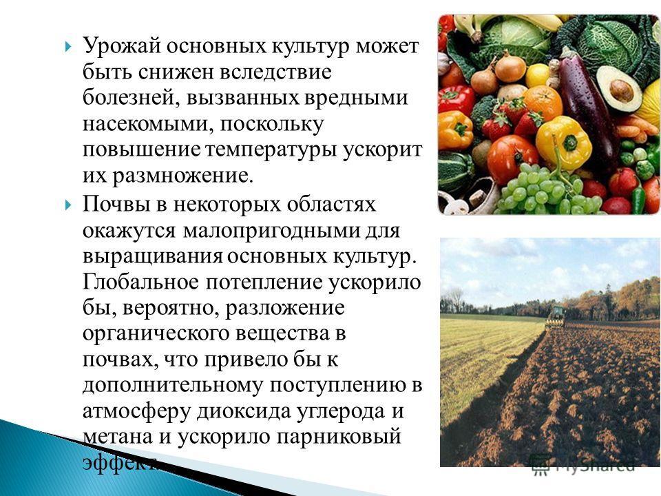 Урожай основных культур может быть снижен вследствие болезней, вызванных вредными насекомыми, поскольку повышение температуры ускорит их размножение. Почвы в некоторых областях окажутся малопригодными для выращивания основных культур. Глобальное поте