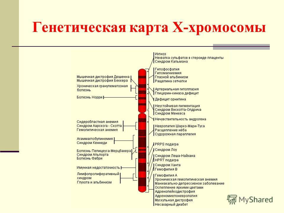 Генетическая карта Х-хромосомы