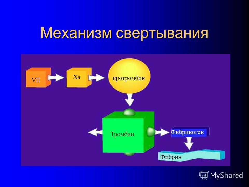 Механизм свертывания VII Xa протромбин Тромбин Фибриноген Фибрин