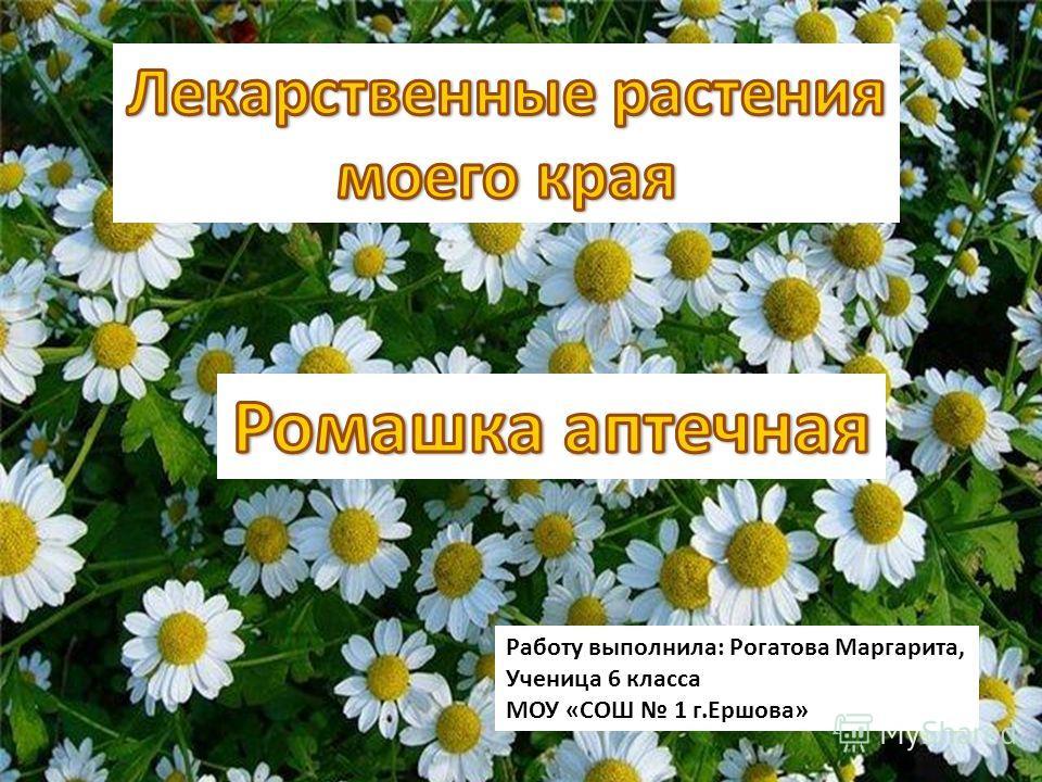 Работу выполнила: Рогатова Маргарита, Ученица 6 класса МОУ «СОШ 1 г.Ершова»