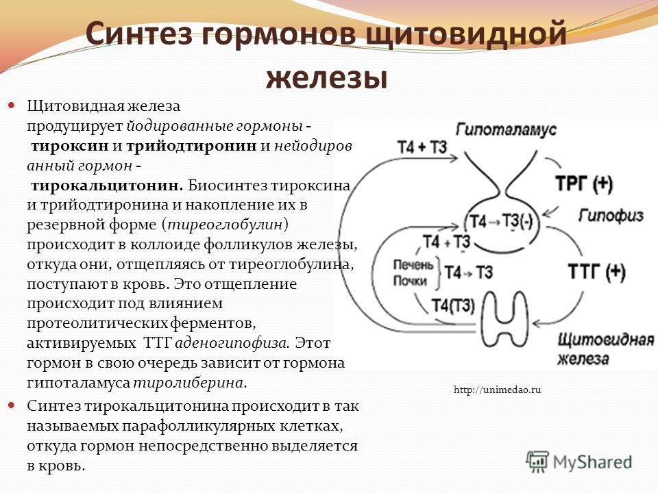 Синтез гормонов щитовидной железы Щитовидная железа продуцирует йодированные гормоны - тироксин и трийодтиронин и нейодиров анный гормон - тирокальцитонин. Биосинтез тироксина и трийодтиронина и накопление их в резервной форме (тиреоглобулин) происхо
