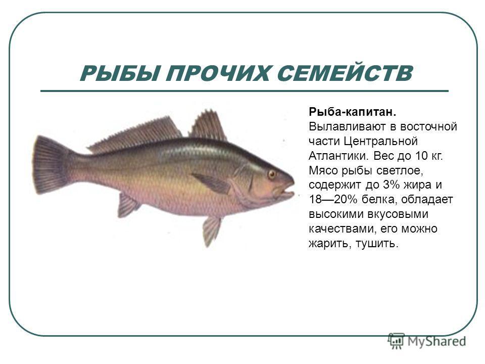 какая рыба ловится в октябре ноябре