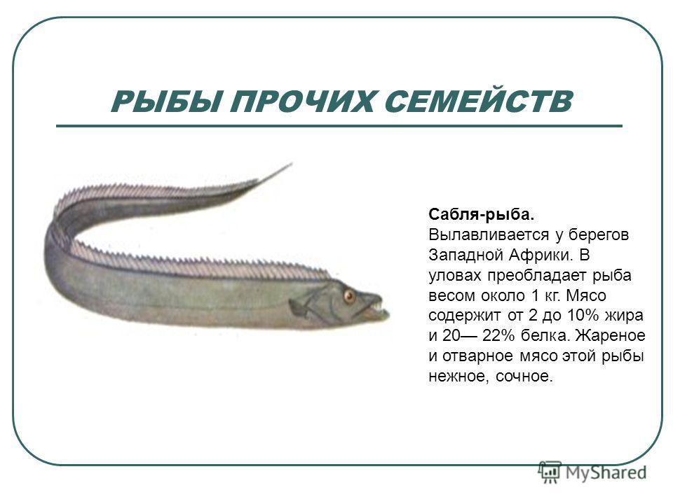 РЫБЫ ПРОЧИХ СЕМЕЙСТВ Сабля-рыба. Вылавливается у берегов Западной Африки. В уловах преобладает рыба весом около 1 кг. Мясо содержит от 2 до 10% жира и 20 22% белка. Жареное и отварное мясо этой рыбы нежное, сочное.