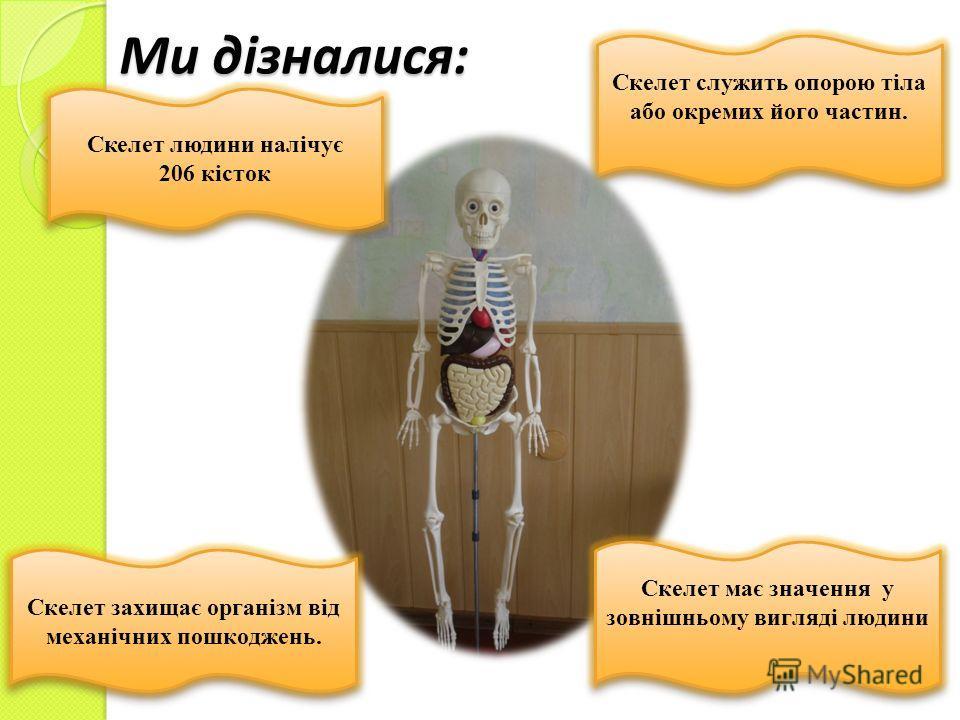 Ми дізналися: Скелет служить опорою тіла або окремих його частин. Скелет служить опорою тіла або окремих його частин. Скелет людини налічує 206 кісток Скелет людини налічує 206 кісток Скелет захищає організм від механічних пошкоджень. Скелет має знач