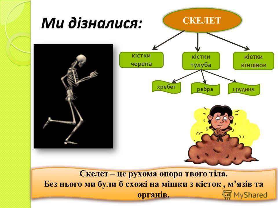 Ми дізналися: СКЕЛЕТ кістки черепа кістки тулуба хребет ребра кістки кінцівок грудина Скелет – це рухома опора твого тіла. Без нього ми були б схожі на мішки з кісток, мязів та органів. Скелет – це рухома опора твого тіла. Без нього ми були б схожі н