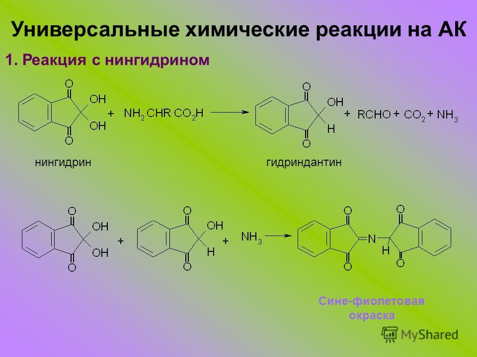 Универсальные химические реакции на АК 1. Реакция с нингидрином ++++ нингидрингидриндантин ++ Сине-фиолетовая окраска