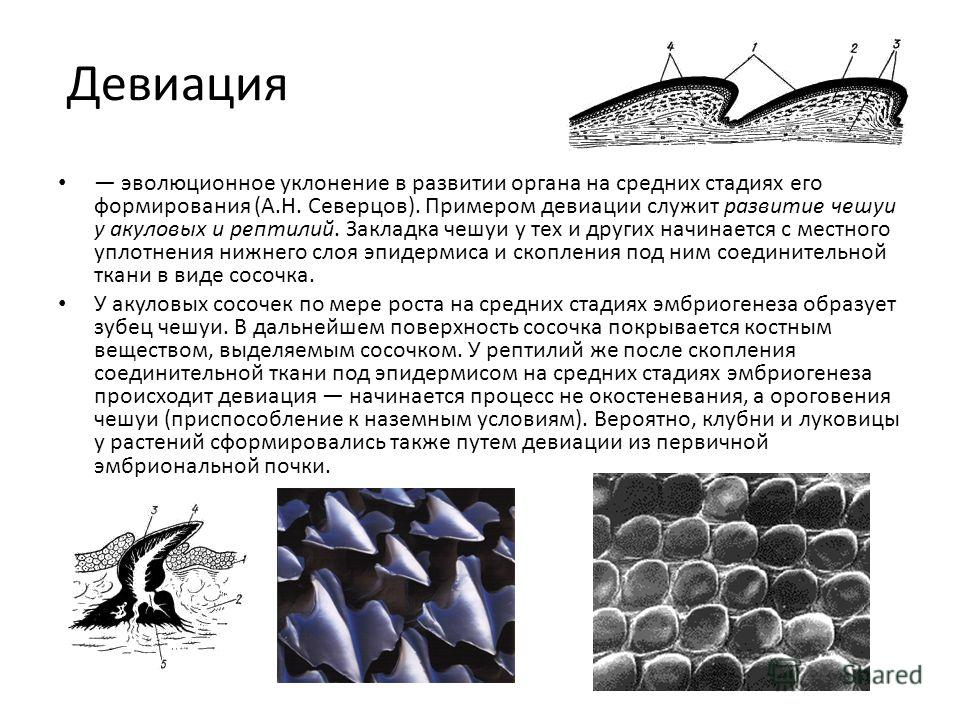Девиация эволюционное уклонение в развитии органа на средних стадиях его формирования (А.Н. Северцов). Примером девиации служит развитие чешуи у акуловых и рептилий. Закладка чешуи у тех и других начинается с местного уплотнения нижнего слоя эпидерми