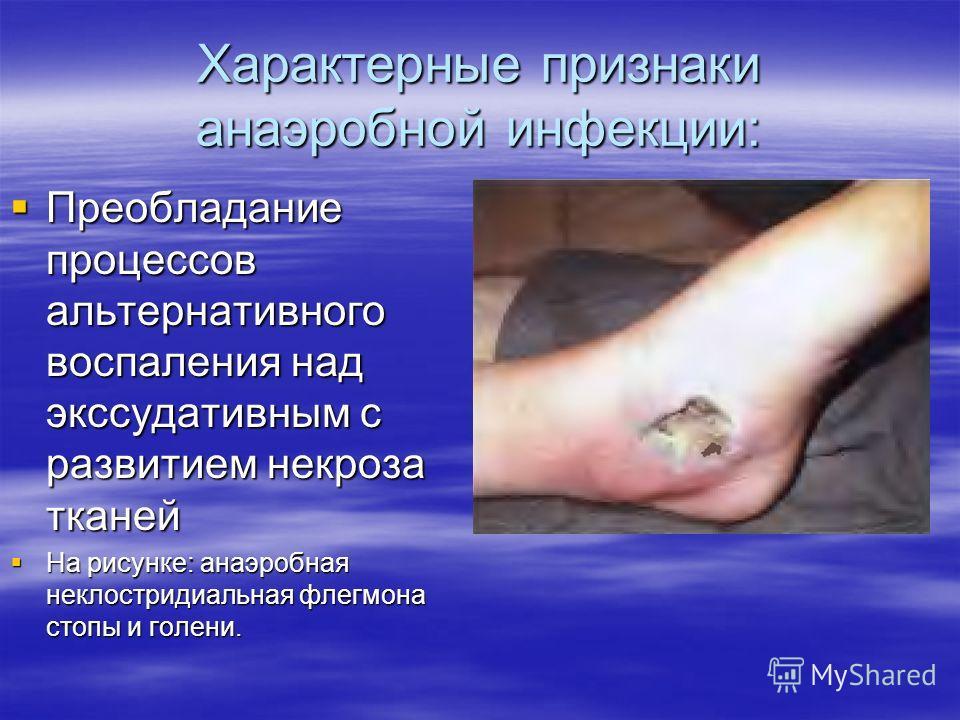 Характерные признаки анаэробной инфекции: Преобладание процессов альтернативного воспаления над экссудативным с развитием некроза тканей Преобладание процессов альтернативного воспаления над экссудативным с развитием некроза тканей На рисунке: анаэро