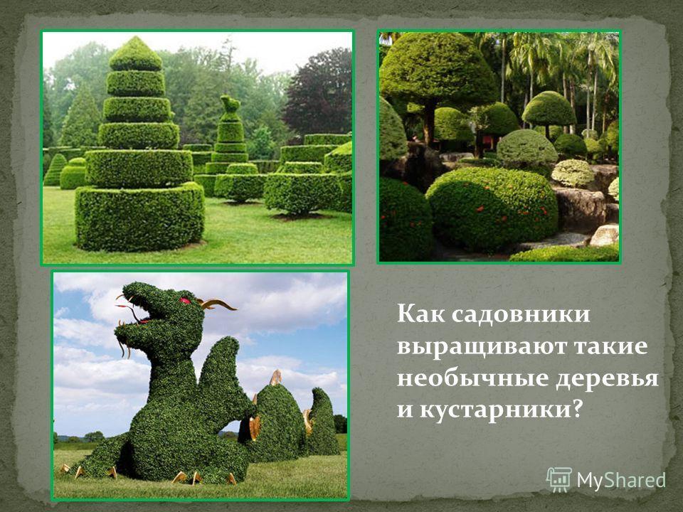 Как садовники выращивают такие необычные деревья и кустарники?
