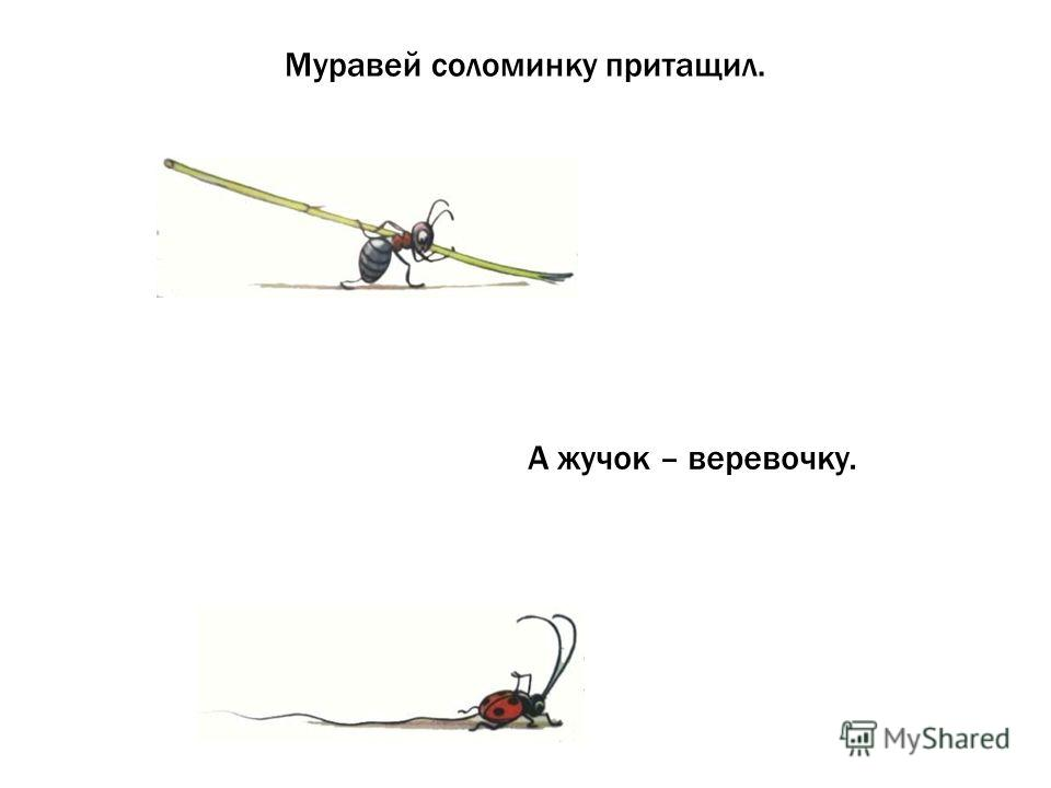 Муравей соломинку притащил. А жучок – веревочку.