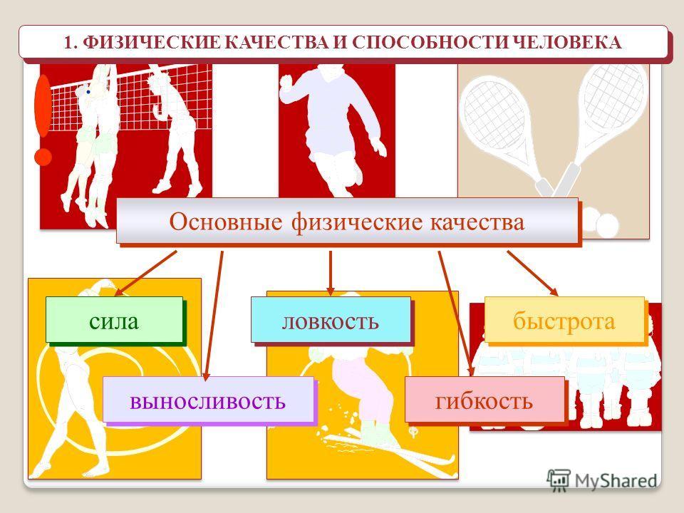 физические качества и способности их классификация