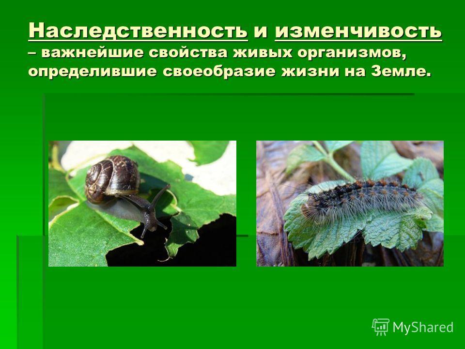 Наследственность и изменчивость – важнейшие свойства живых организмов, определившие своеобразие жизни на Земле.