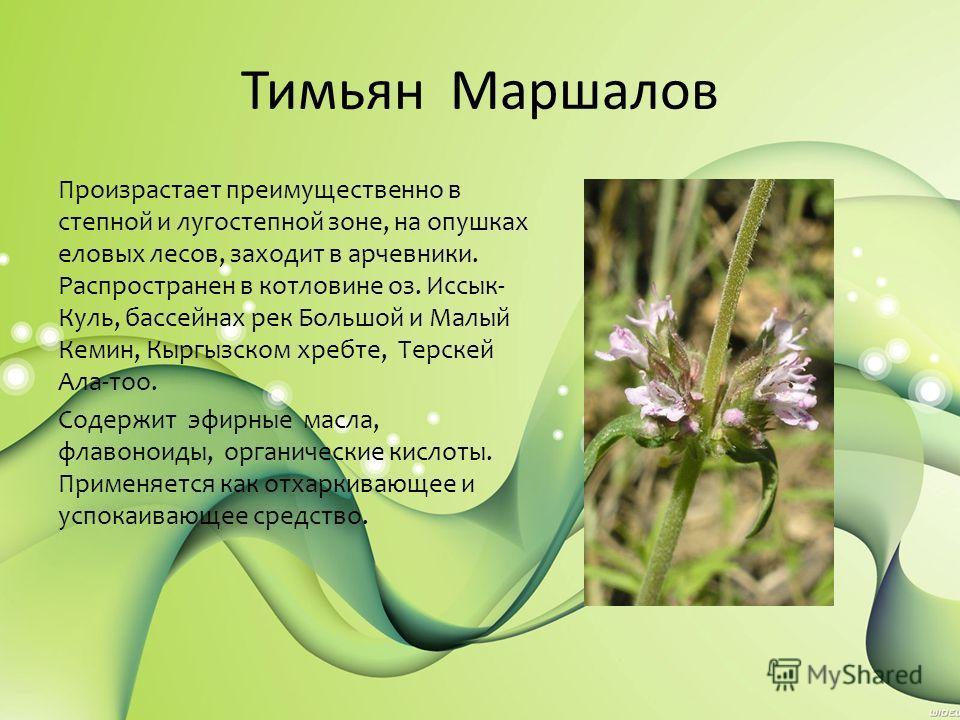 Тимьян Маршалов Произрастает преимущественно в степной и лугостепной зоне, на опушках еловых лесов, заходит в арчевники. Распространен в котловине оз. Иссык- Куль, бассейнах рек Большой и Малый Кемин, Кыргызском хребте, Терскей Ала-тоо. Содержит эфир