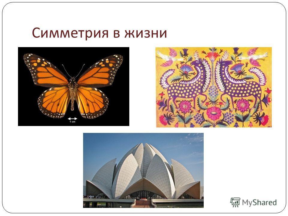 Симметрия в жизни
